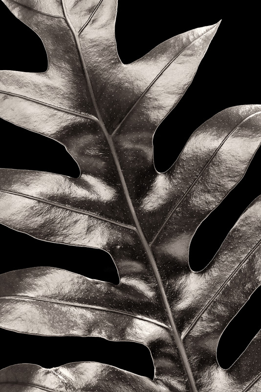 bw, monochrome, plants, flora, open edition, holiday special