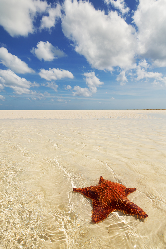 grand bahamas, deep water cay, cushion star, , photo