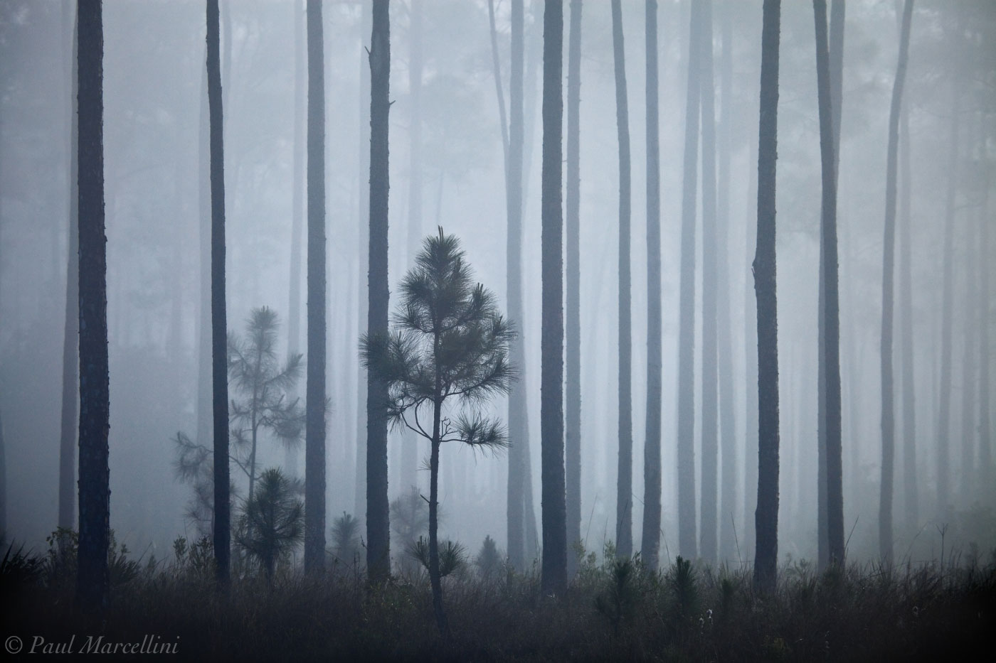 everglades, pines, fog, morning, Florida, nature, photography, florida national parks, photo