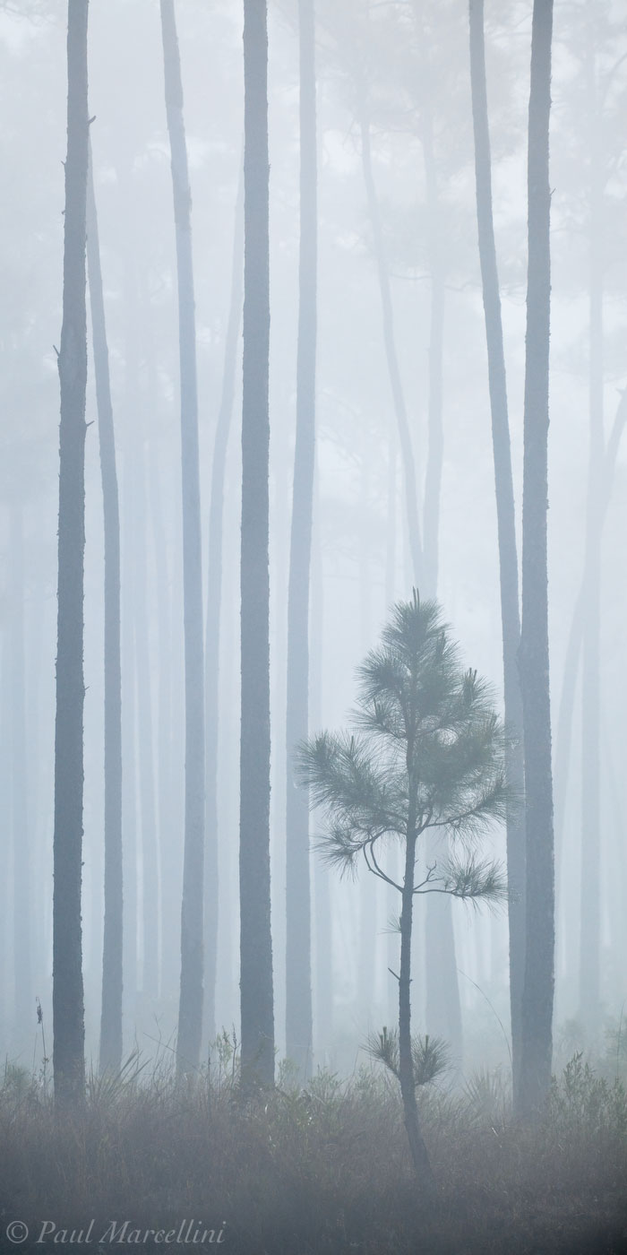 everglades, pinelands, fog, lines, Florida, nature, photography, florida national parks, photo
