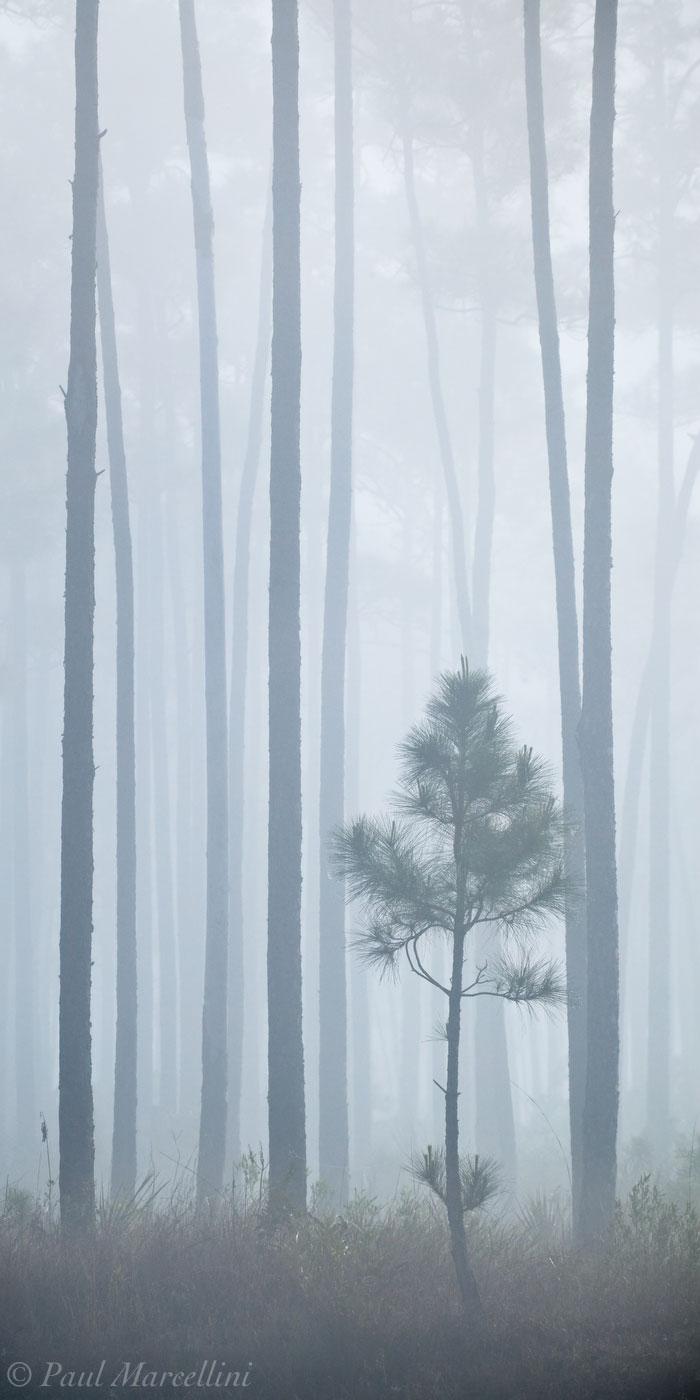 everglades, pinelands, fog, lines, Florida, nature, photography, florida national parks, photo