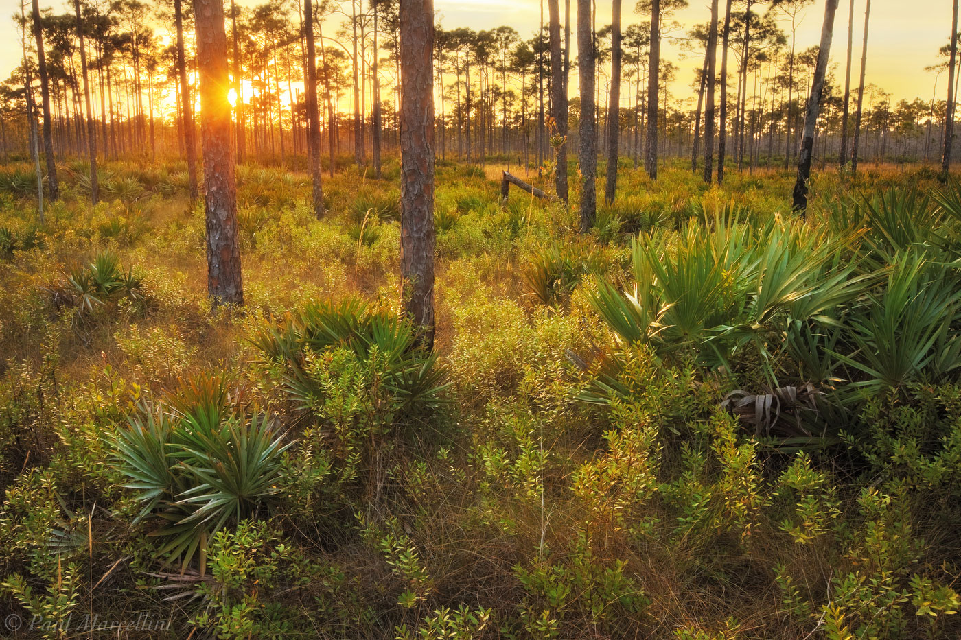 pine flatwoods, jonathan dickinson, central florida, sunset, florida, south florida, nature, photography, photo