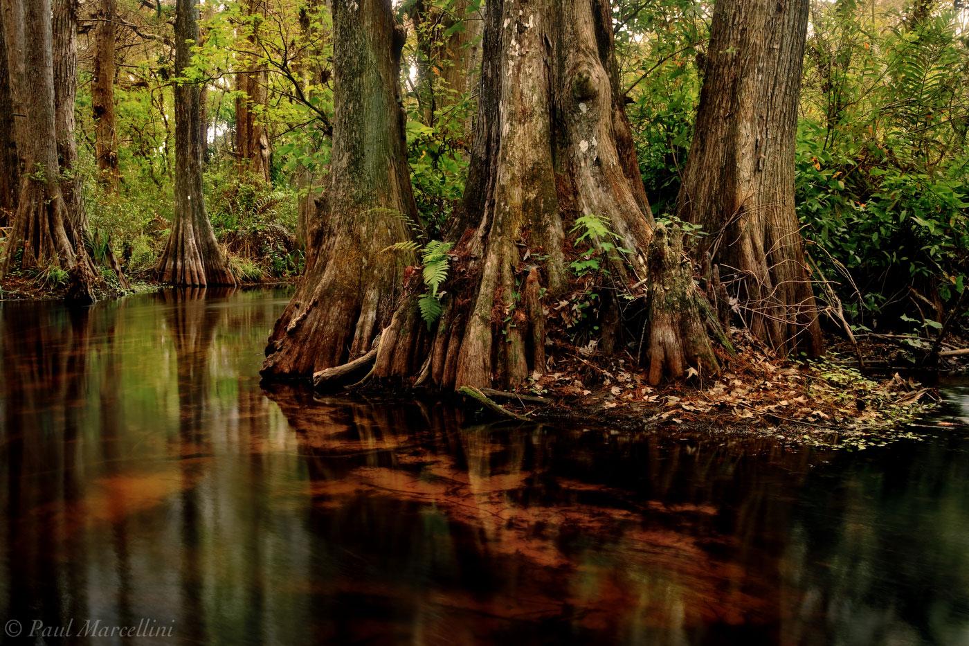 loxahatchee, river, florida, south florida, jupiter, nature, photography, photo