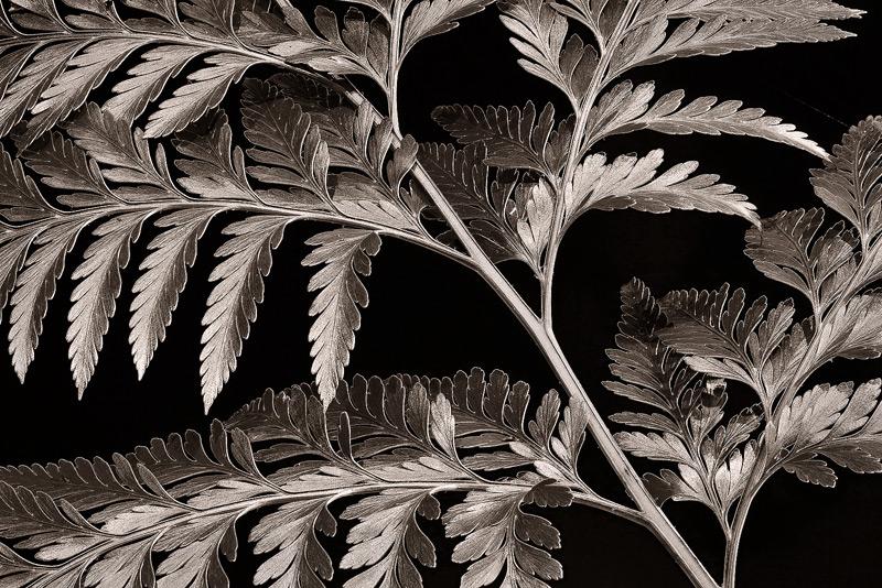 bw, monochrome, plants, flora, photo