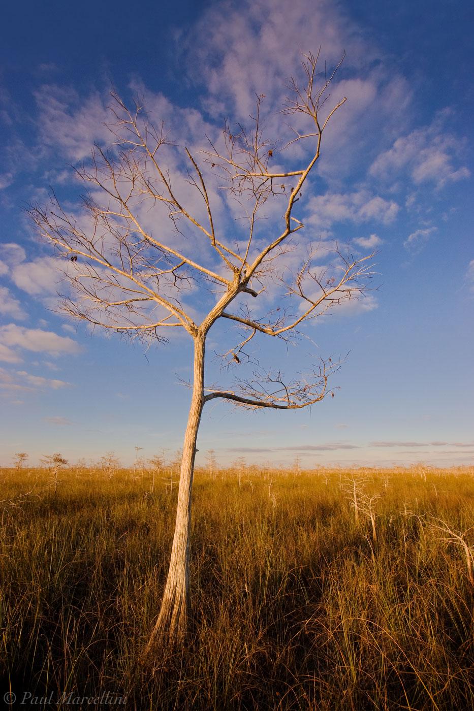 cloud, bald cypress, taxodium distichum, everglades, Florida, nature, photography, florida national parks, photo