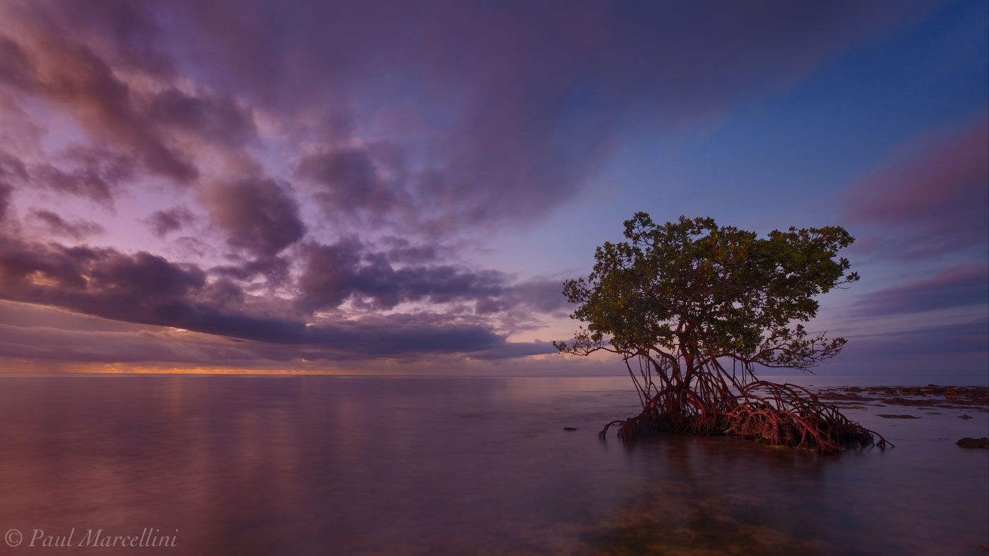 Big Pine Key, Florida Keys, Florida, mangrove, morning, keys, south florida, nature, photography, photo