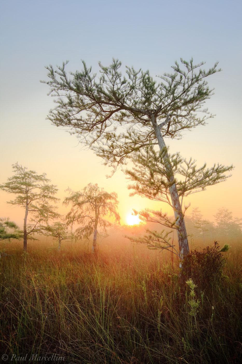 foggy, cypress, everglades, Florida, nature, photography, florida national parks, photo