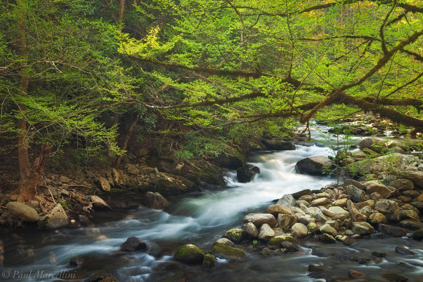 Great Smoky Mountains National Park, Tennessee, spring, smokies, photo