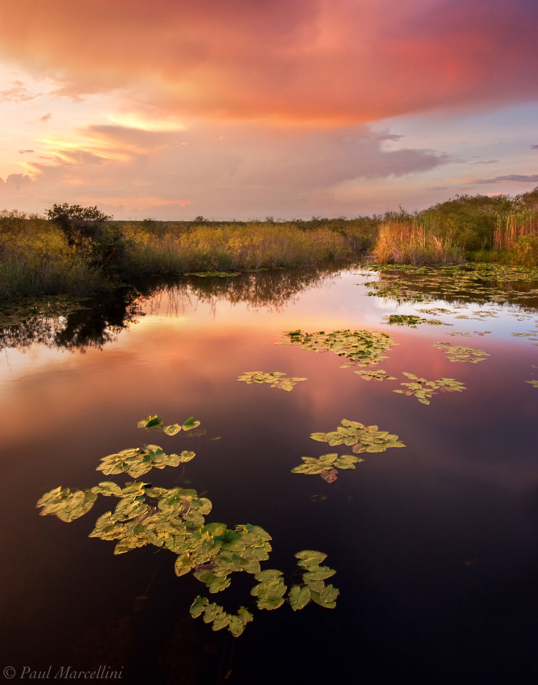 everglades, sunset, spadder dock, nuphar luteum, pond, Florida, nature, photography, photo