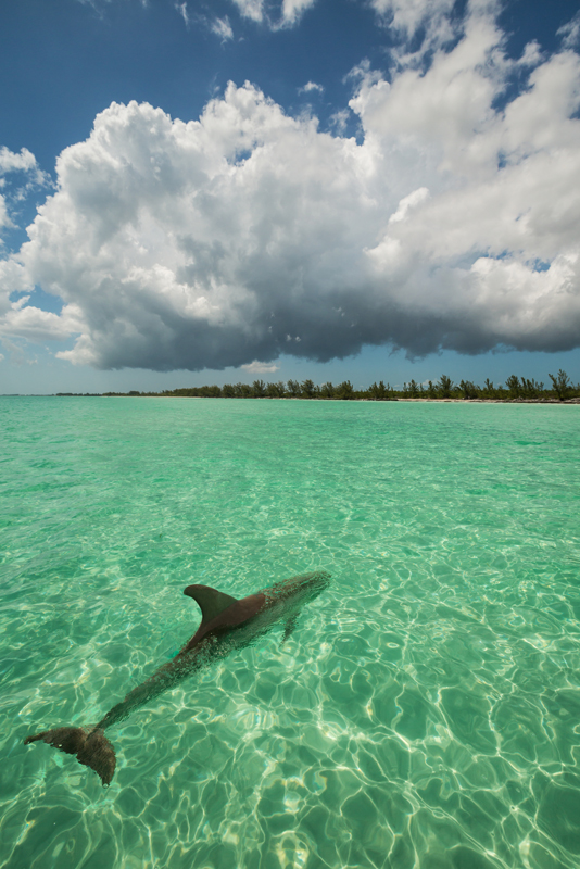 deep water cay, grand bamahas, dolphin, photo
