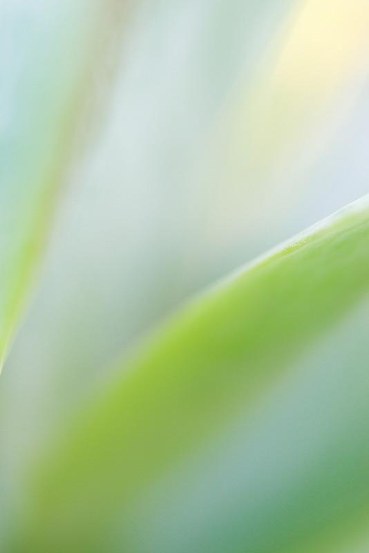 kalanchoe, succulent, photo