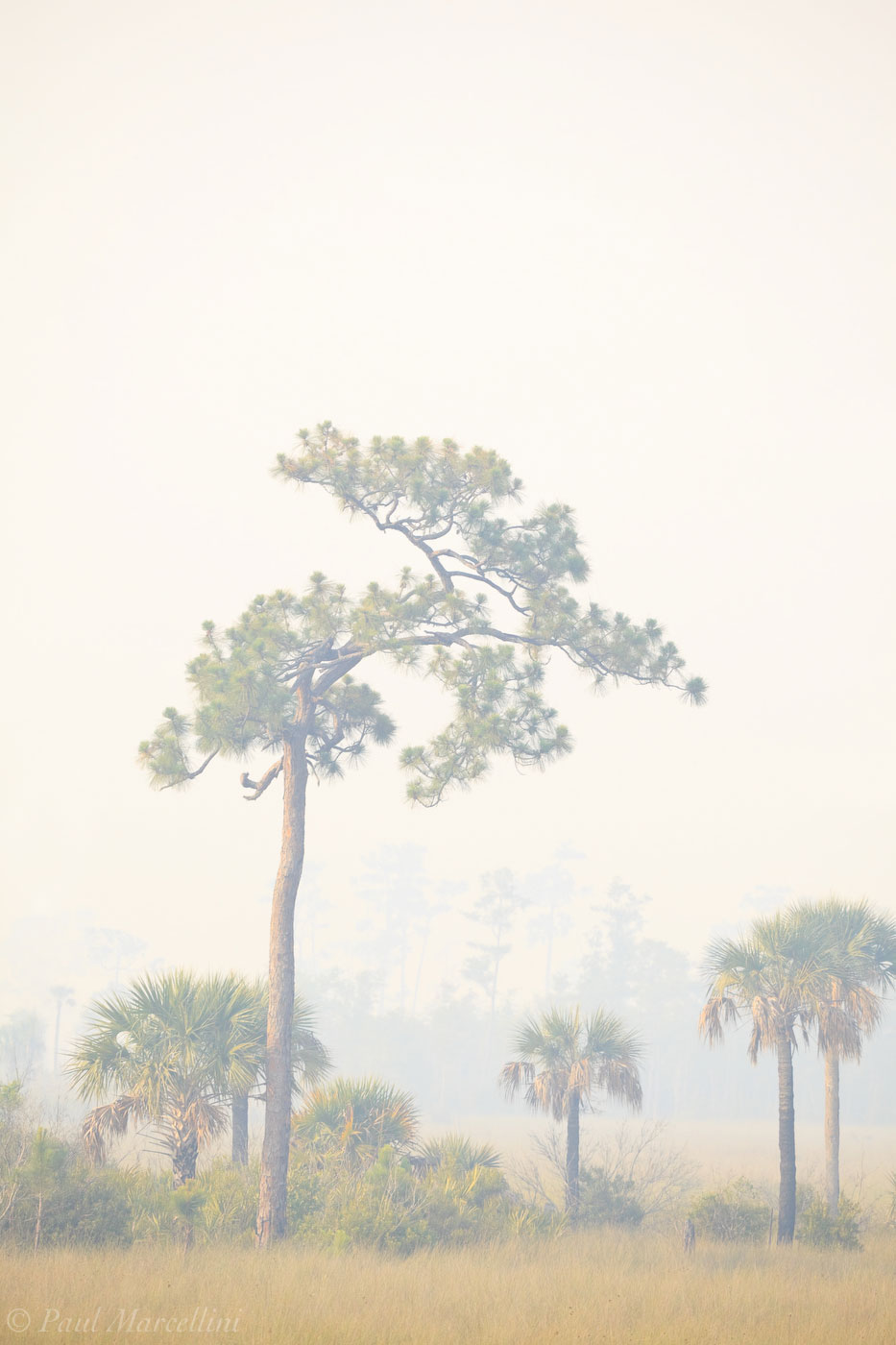 big cypress, fire, smoke, trees, Florida, nature, photography, photo