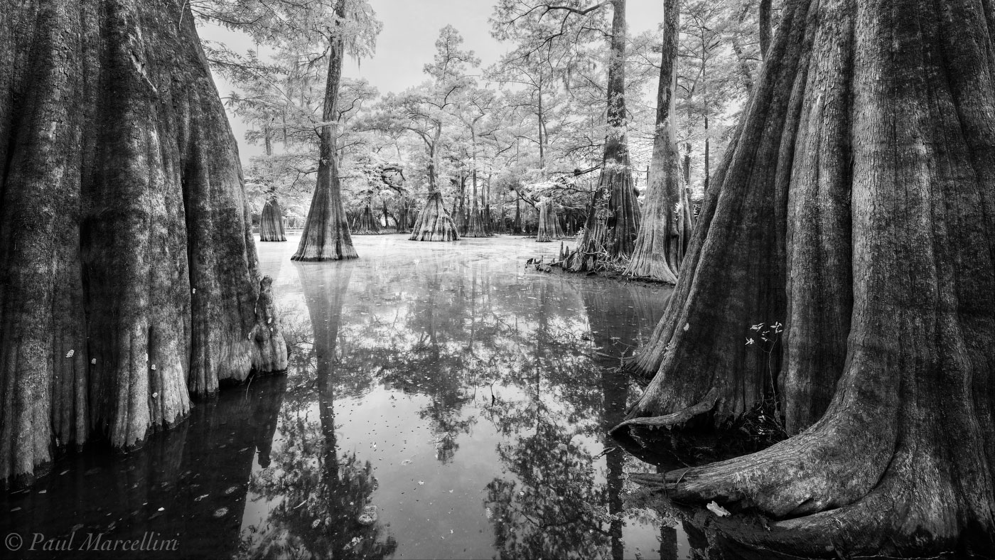 Suwannee Valley, Florida, cypress, nature, photography, photo