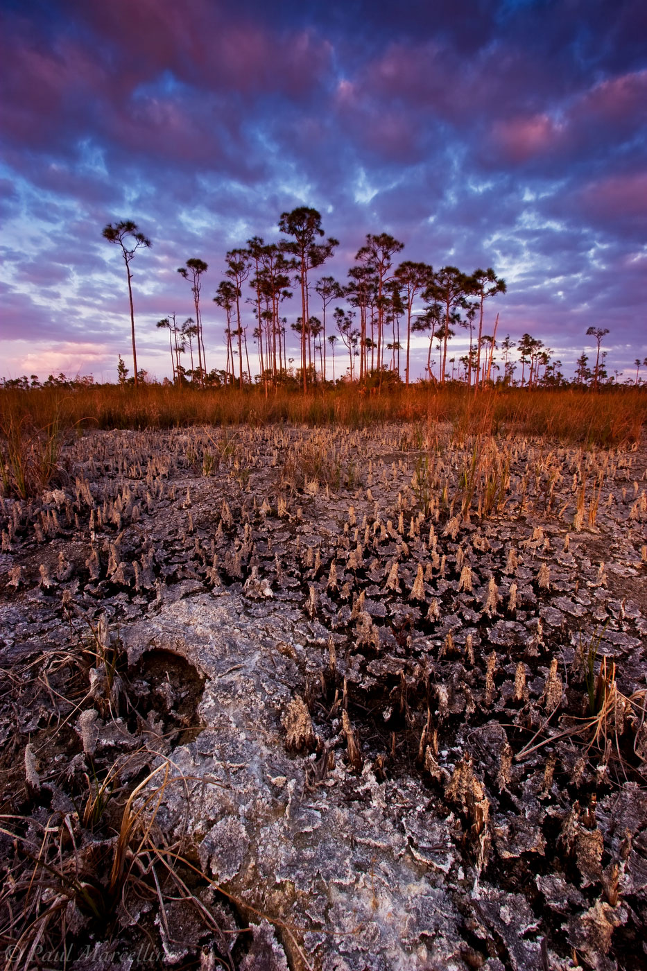 everglades, pinelands, sunset, periphyton, dry season, Florida, nature, photography, florida national parks, photo