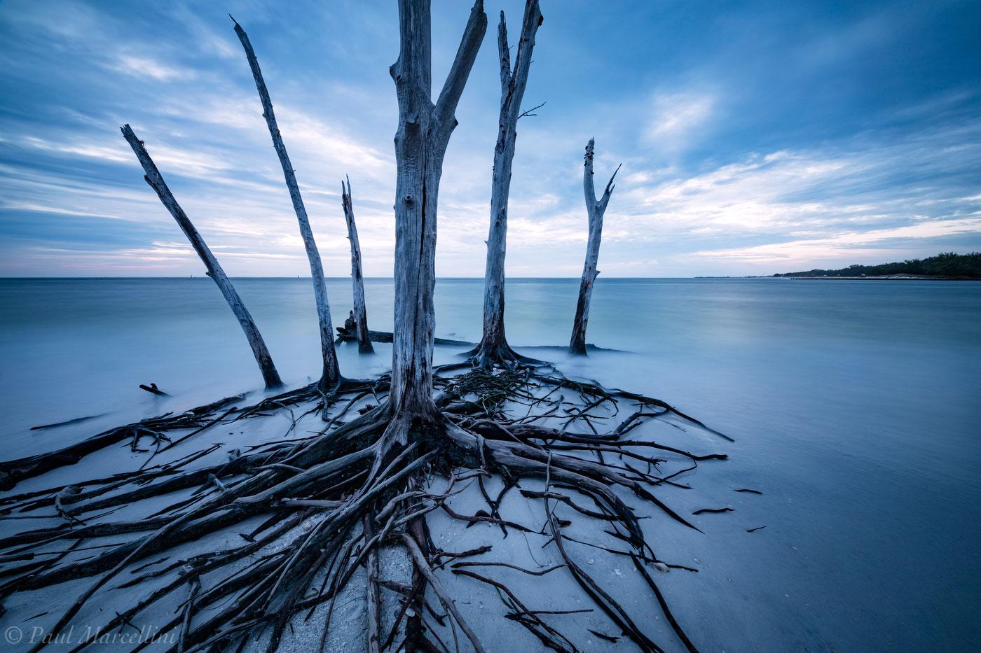 longboat key, florida, nature, photography, photo