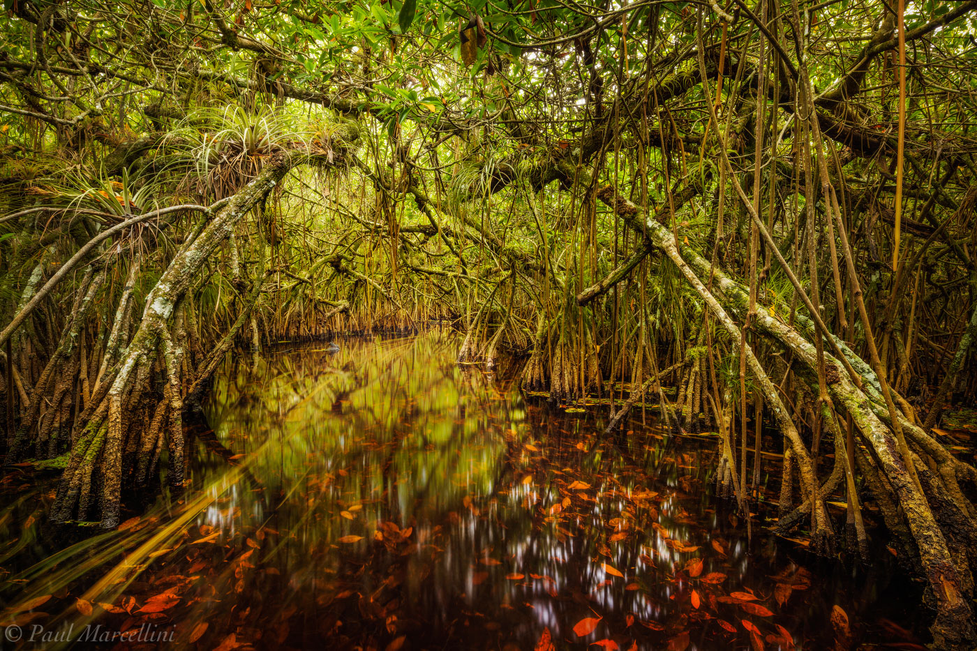Turner River, Big Cypress National Preserve, Florida, mangrove tunnel, , photo