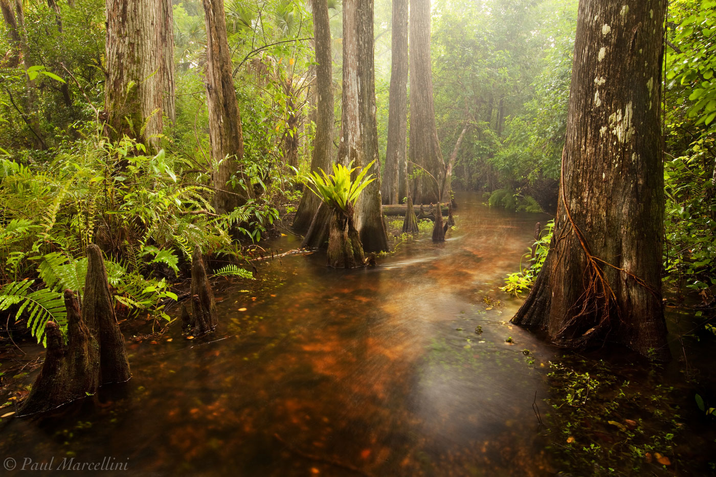 thunderstorm, big cypress, rain, misty, river, stream, Florida, nature, photography, photo