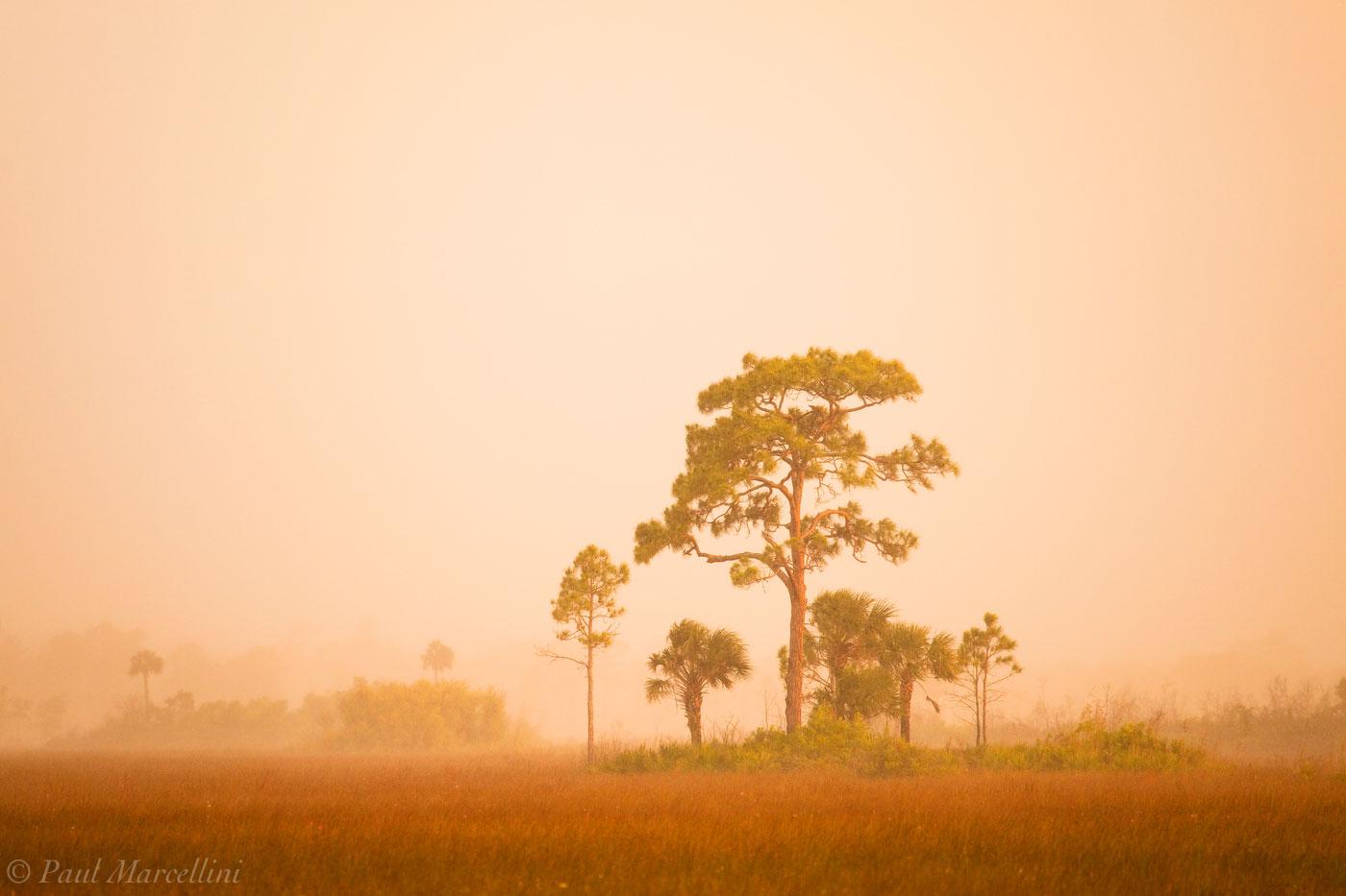 big cypress, rain, pines, sunset, Florida, nature, photography, florida national parks, photo