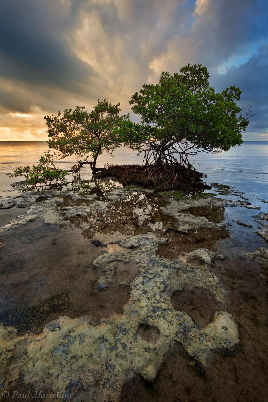 red mangrove, black mangrove, florida, keys, big pine, sunrise, florida keys, south florida, nature, photography, photo