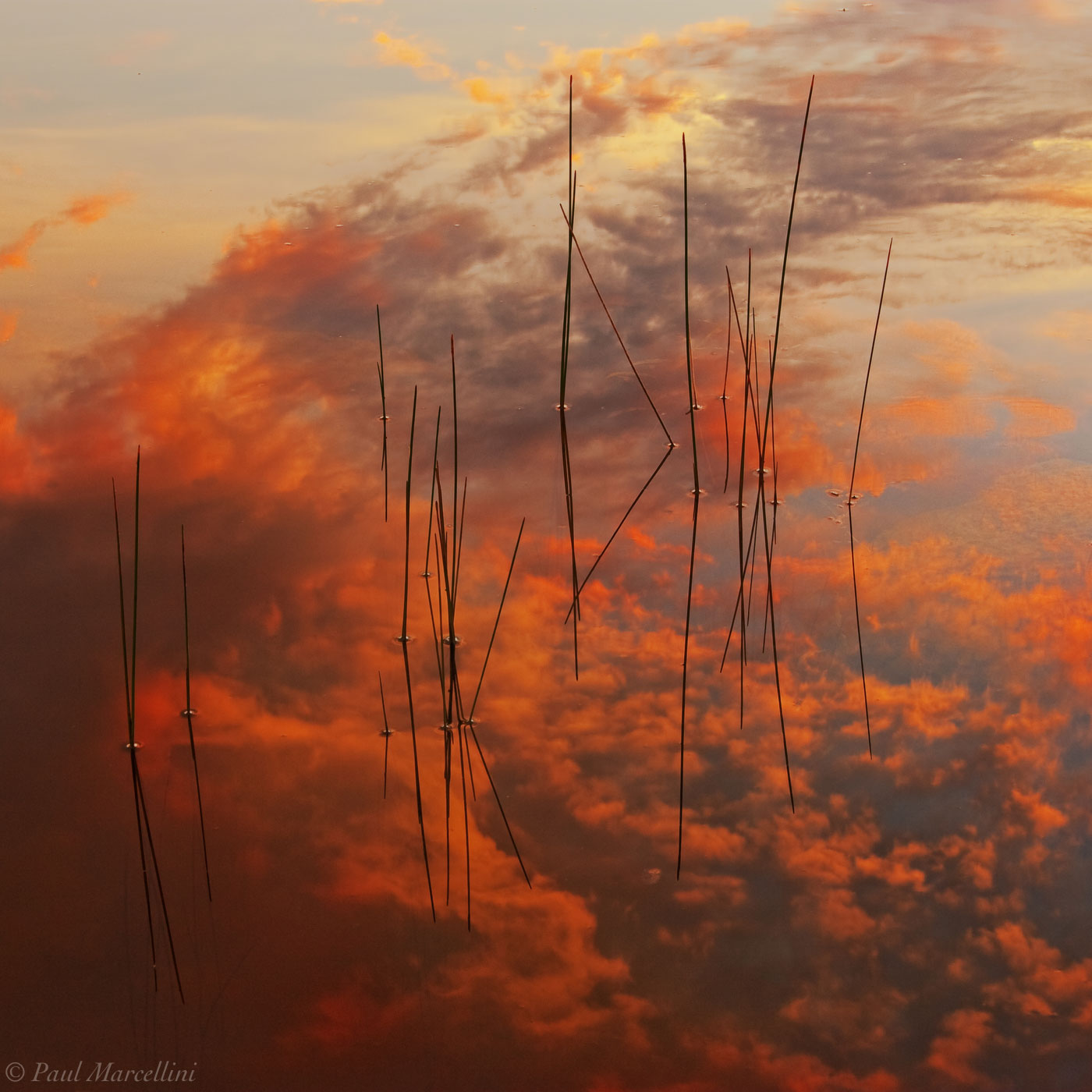sunset, everglades, reflection, reeds, water, Florida, nature, photography, florida national parks, photo