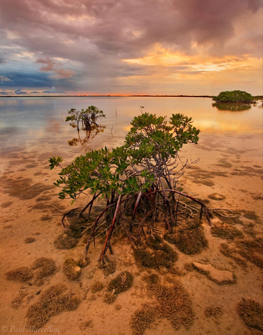 red mangrove, rhizophora mangle, sunset, stormy, florida, keys, florida keys, south florida, nature, photography, photo