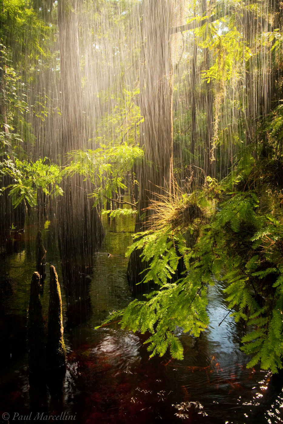 SunShower  Fisheating Creek  Florida Landscape Photography by Paul Marcellini # Sunshower Tune_204549