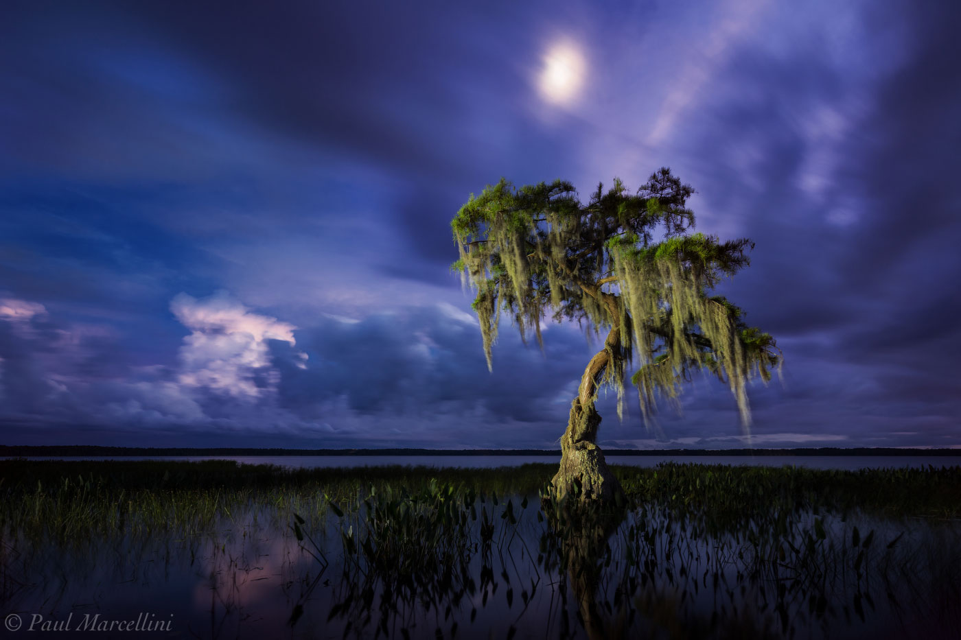 cypress, osceola national forest, florida, moon, north florida, nature, photography, photo