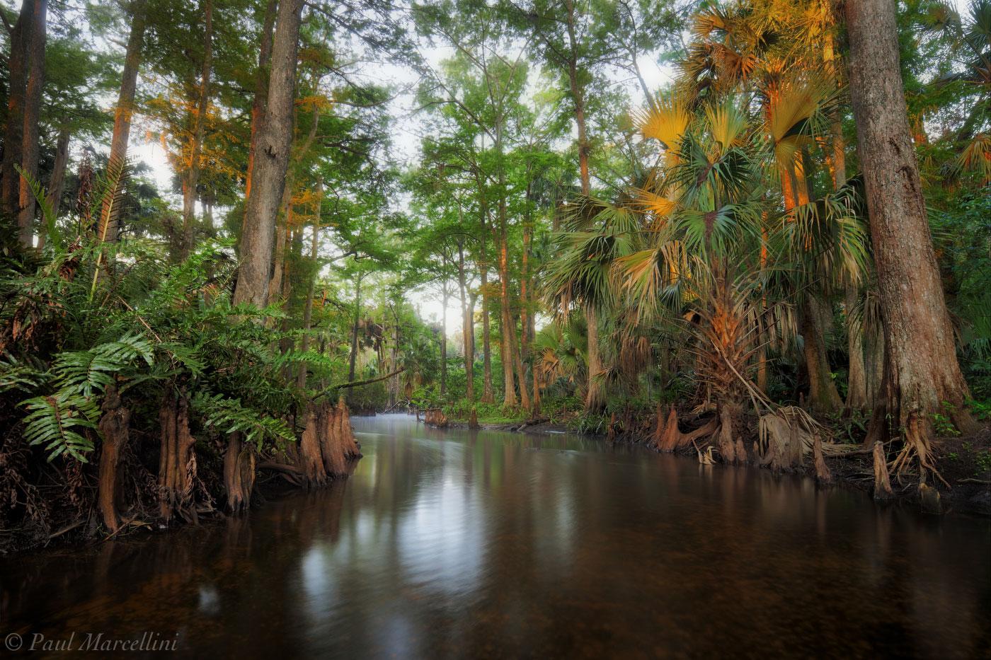 Loxahatchee River, Florida, morning, south florida, jupiter, nature, photography, photo