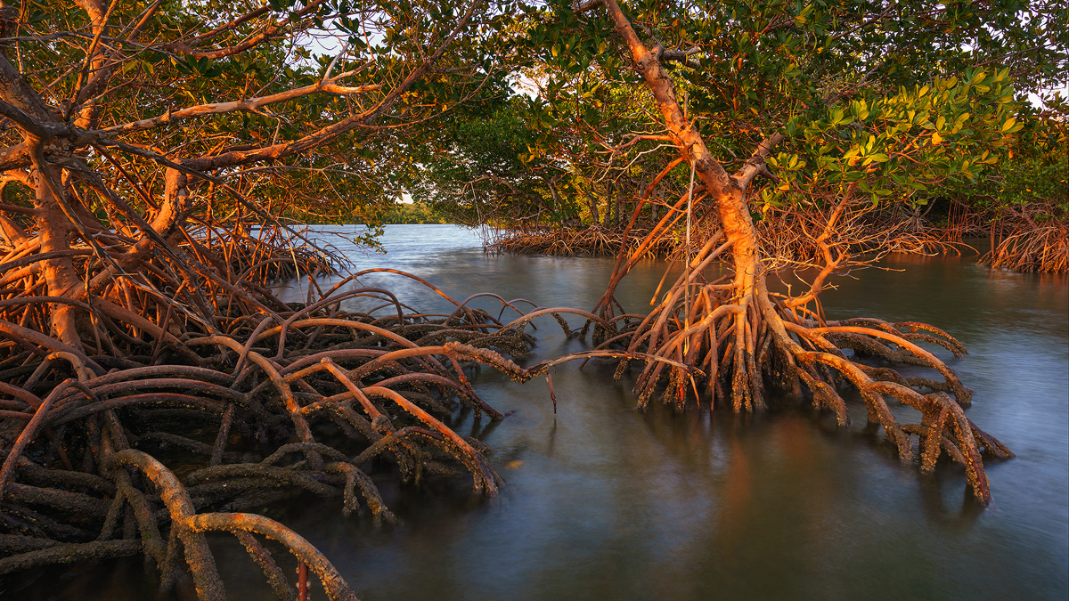 Ten Thousand Islands, Everglades National Park, Florida, mangroves, nature, photography, florida national parks