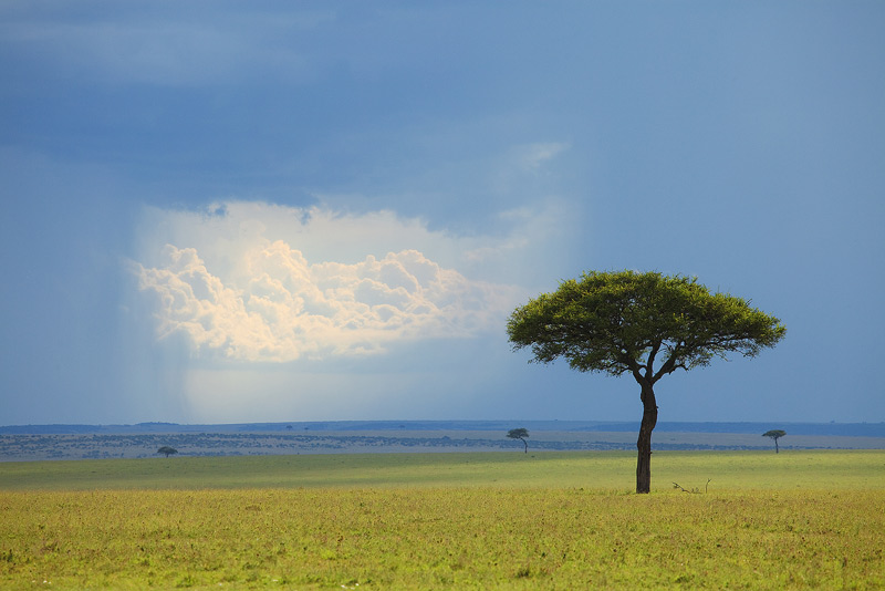 acacia, rain, storm, grasslands, kenya, masai mara, africa, photo