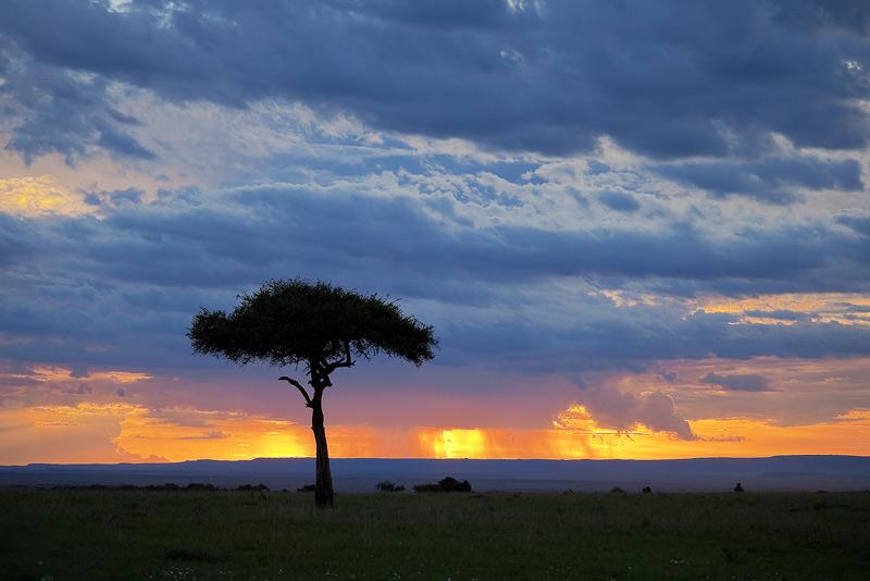 acacia, sunset, storm, masai mara, kenya, africa, photo