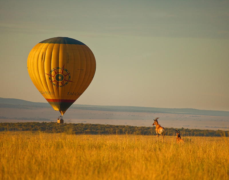 hot air balloon, hartebeast, kenya, africa, masai mara, photo