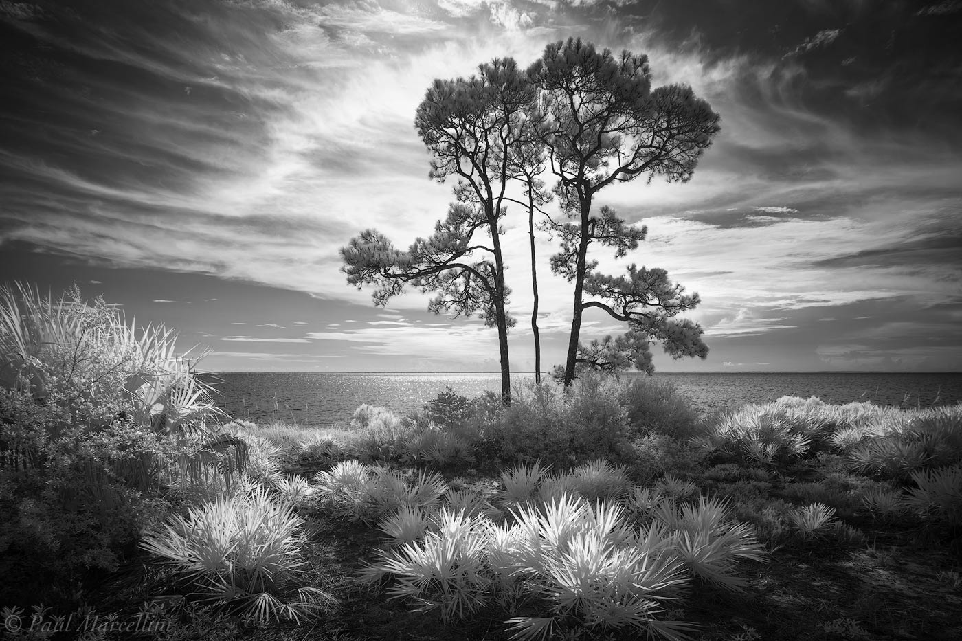 Cape San Blas, St. Joseph Peninsula State Park, Florida, photo