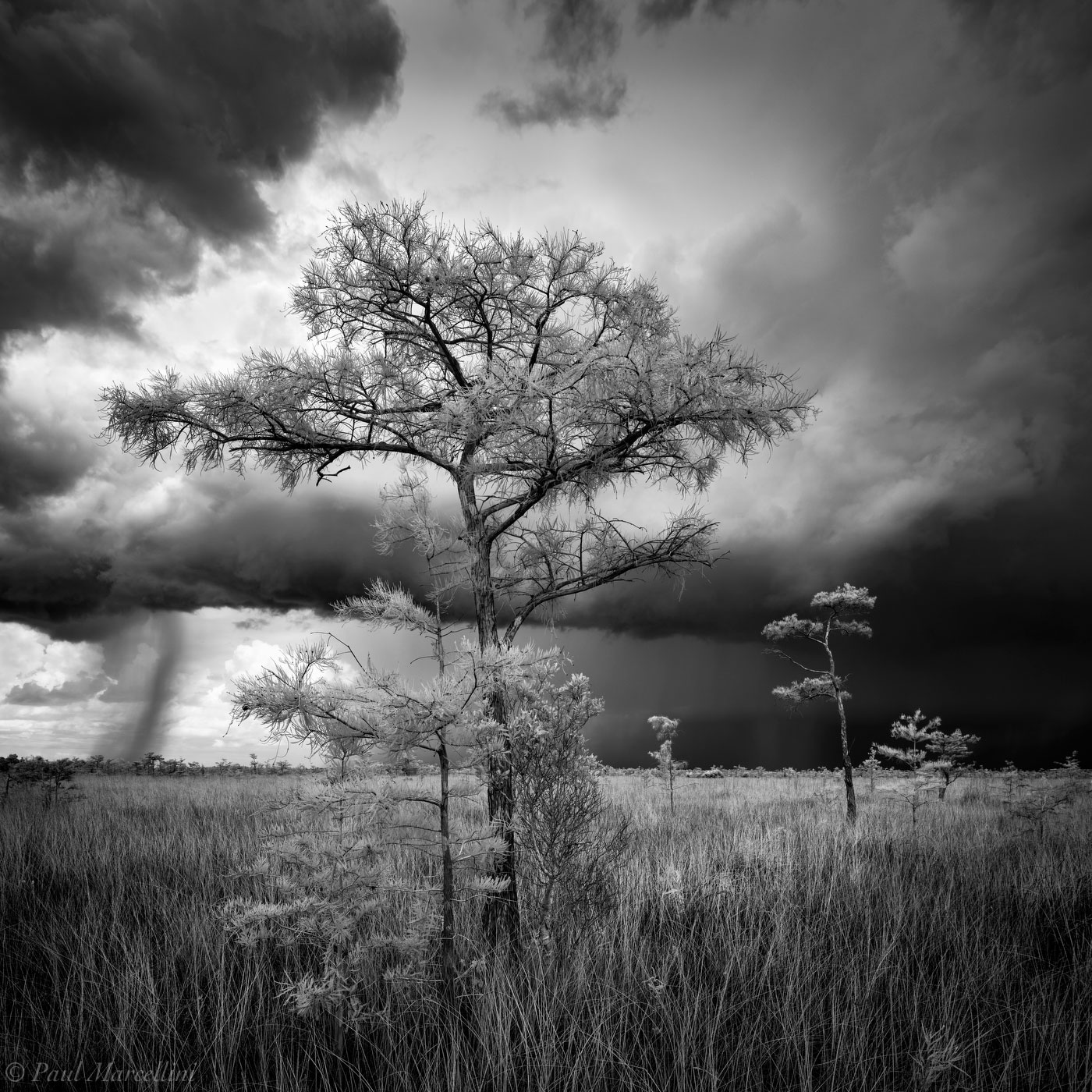Everglades National Park, Florida, cypress, storm, photo
