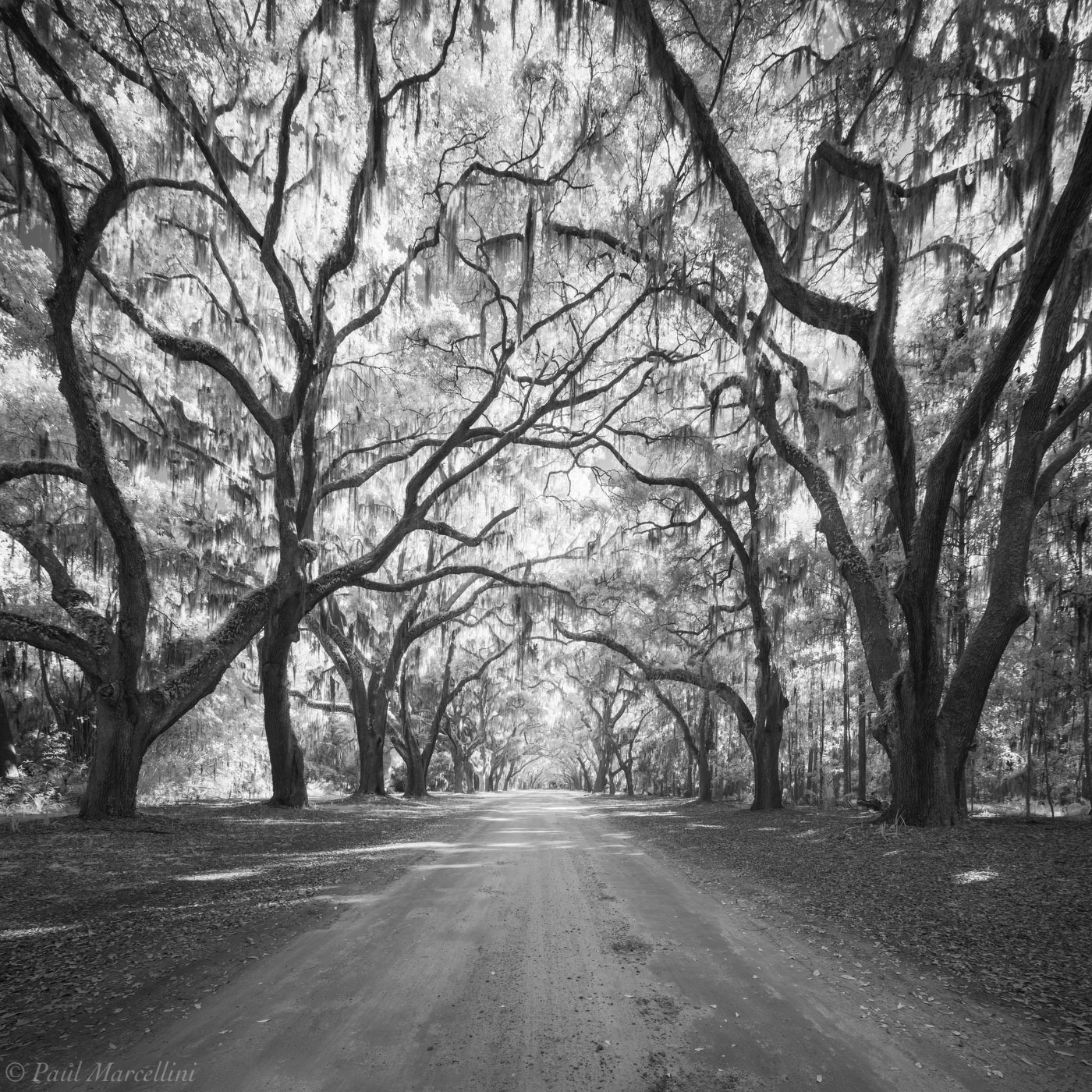 Wormsloe Plantation, Savannah, Georgia, photo