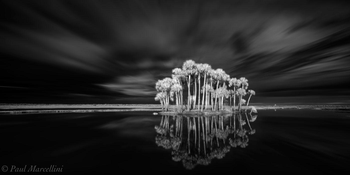 Econlockhatchee river, Little Big Econ State Forest, Florida, palms, UFHEALTH, photo