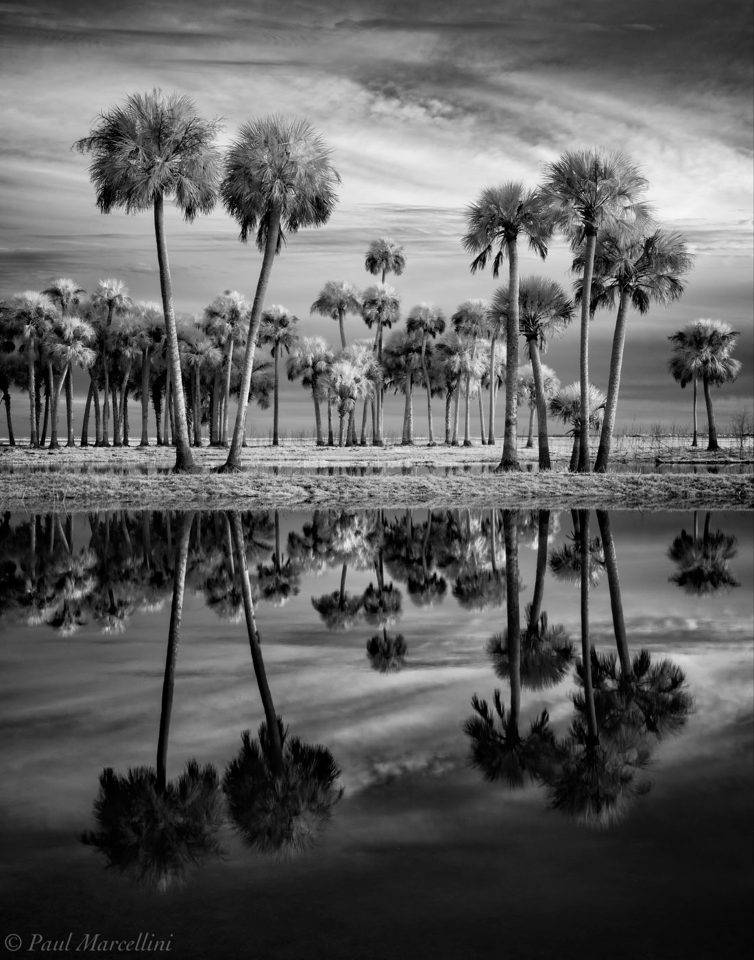 Little Big Econ State Forest, Florida, Econlockhatchee river, sabal palms, UFHEALTH, photo