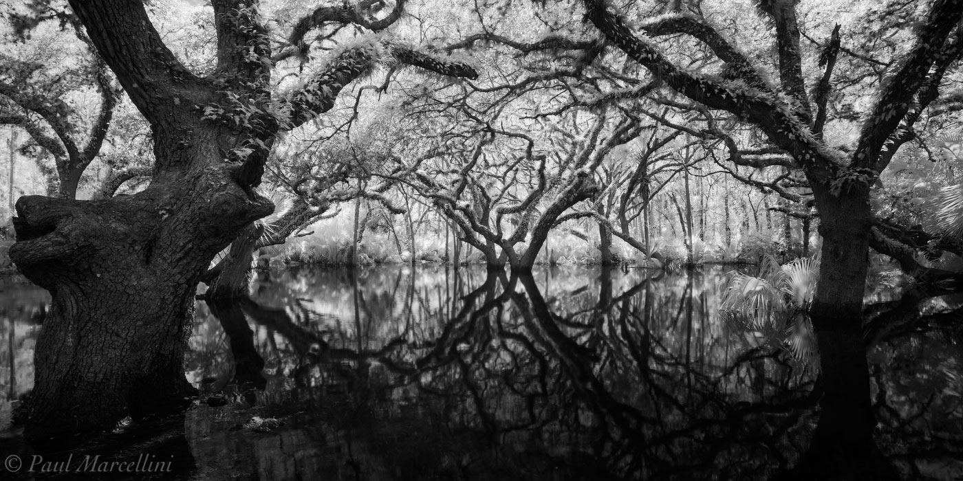 Fisheating Creek, Florida, oaks, flood, photo