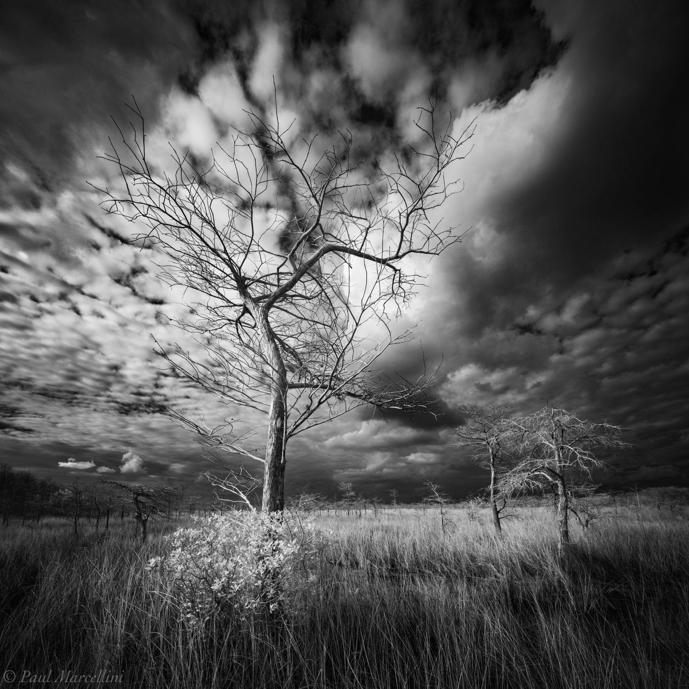 Everglades National Park, Florida, stormy , photo