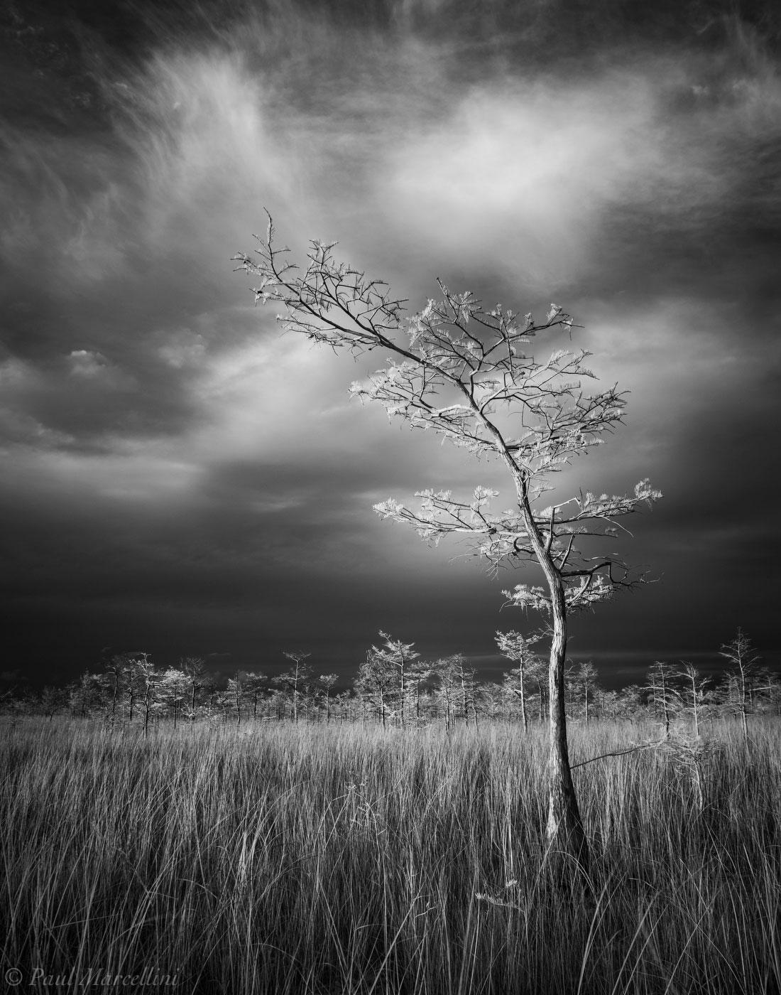 Everglades National Park, Florida, cypress, photo