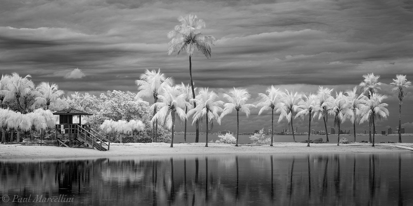 matheson hammock, miami, florida, palm, infrared, photo