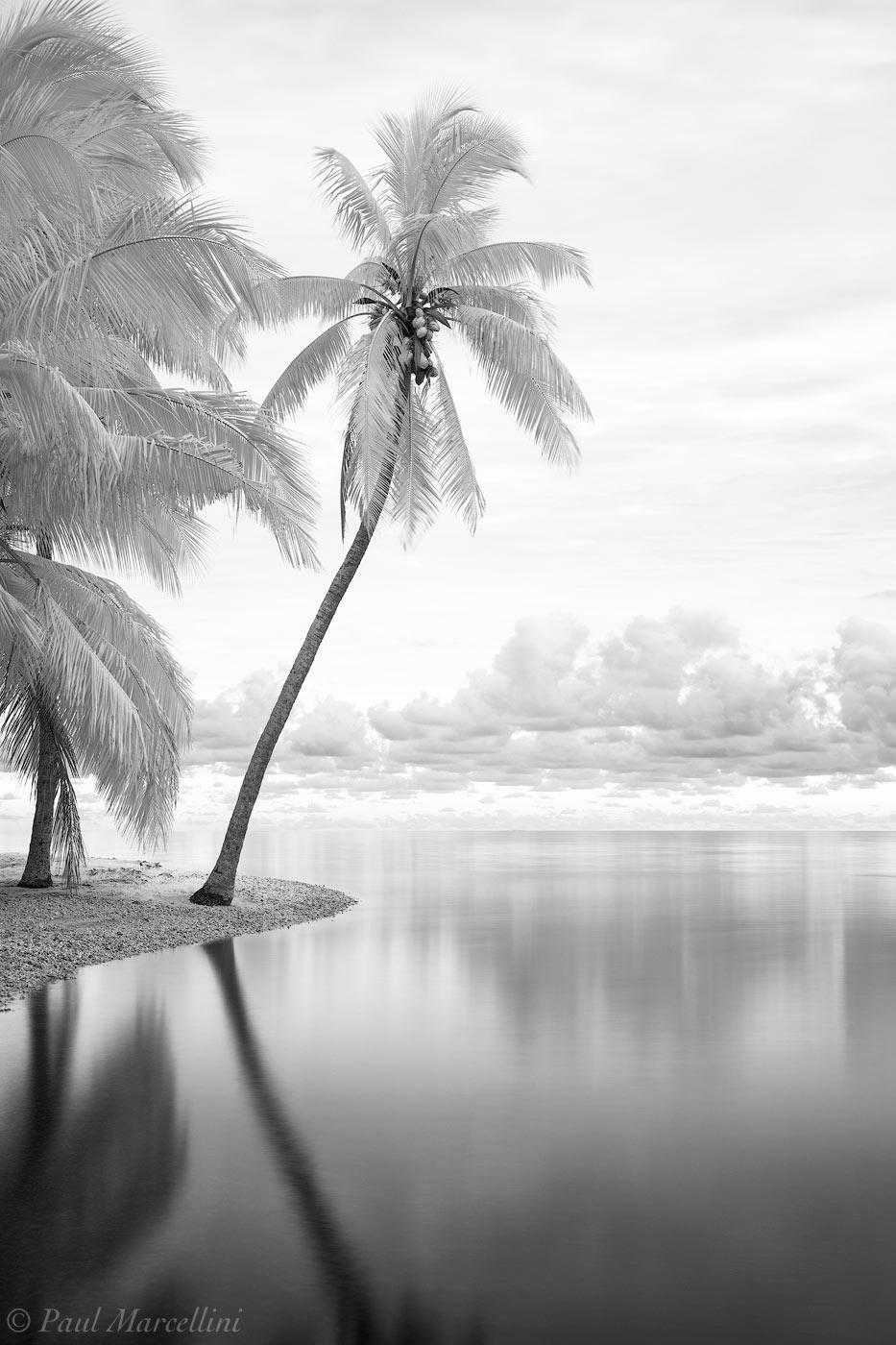 Matheson Hammock, Miami, Florida, palm, photo