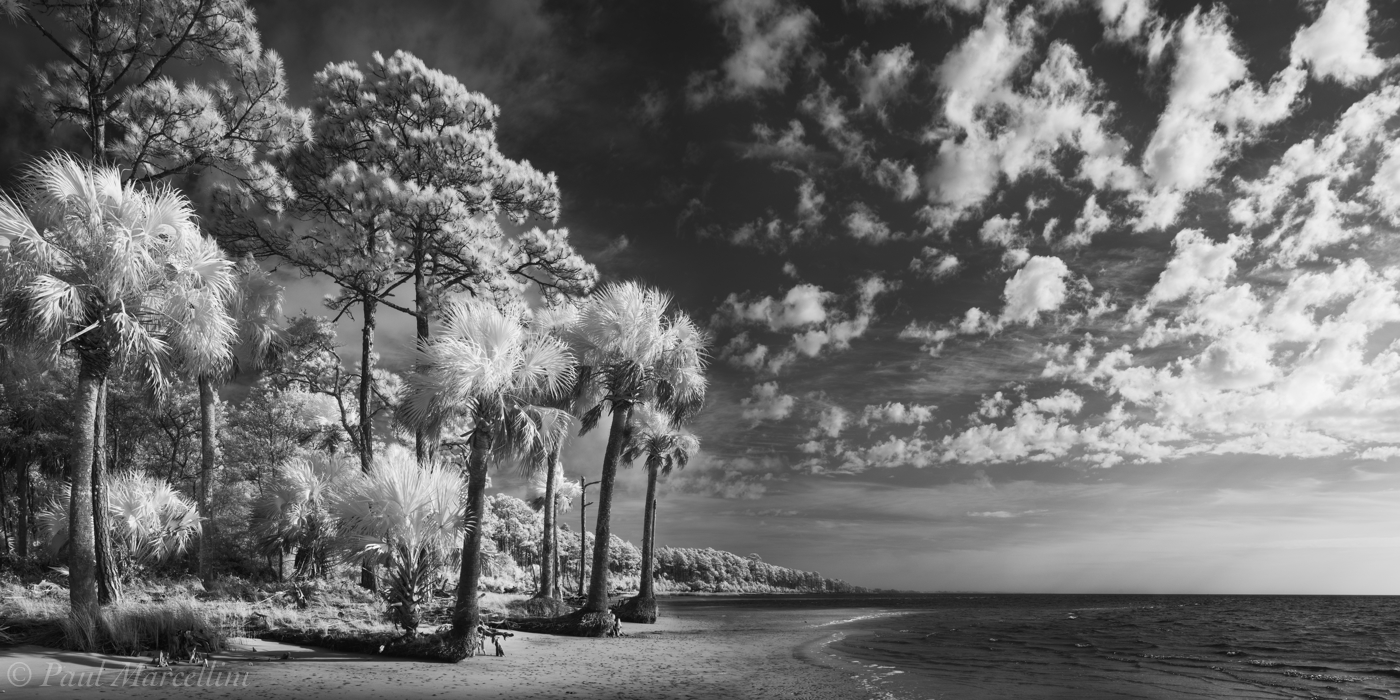 palms, pines, gulf of mexico, forgotten coast, florida, photo