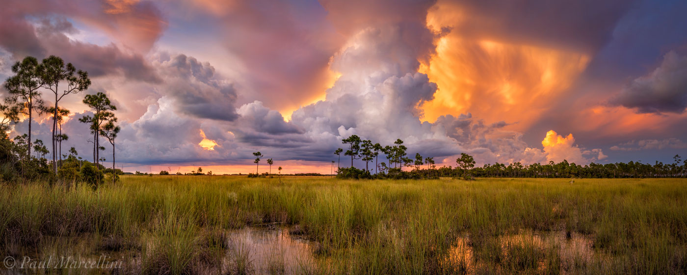 pineland, pine rockland, everglades national park, florida, landscape, , photo