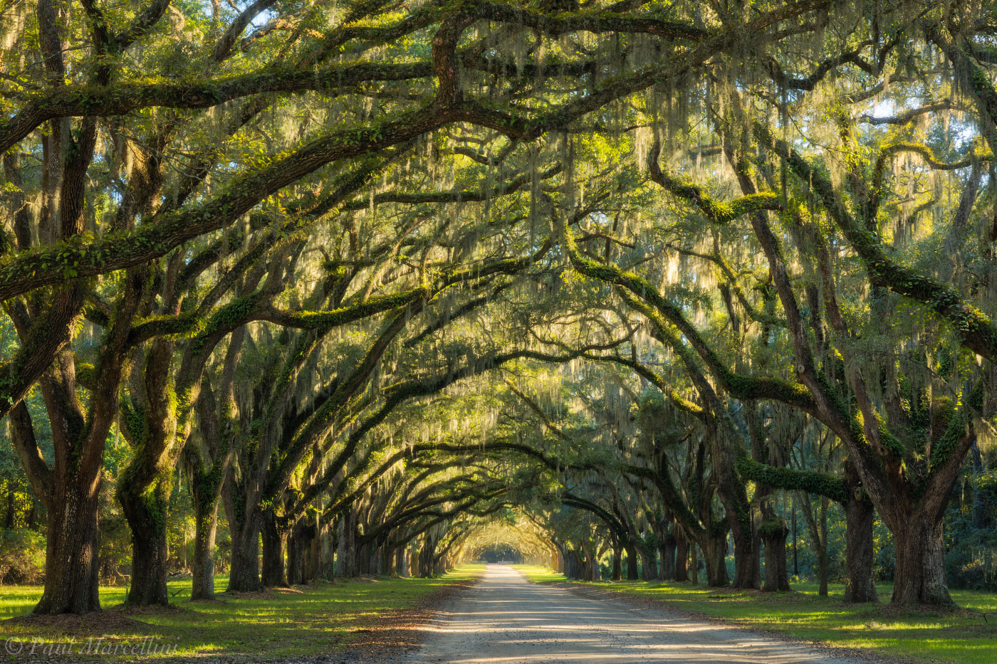 Wormsloe Plantation, Savannah, Georgia, oaks, photo