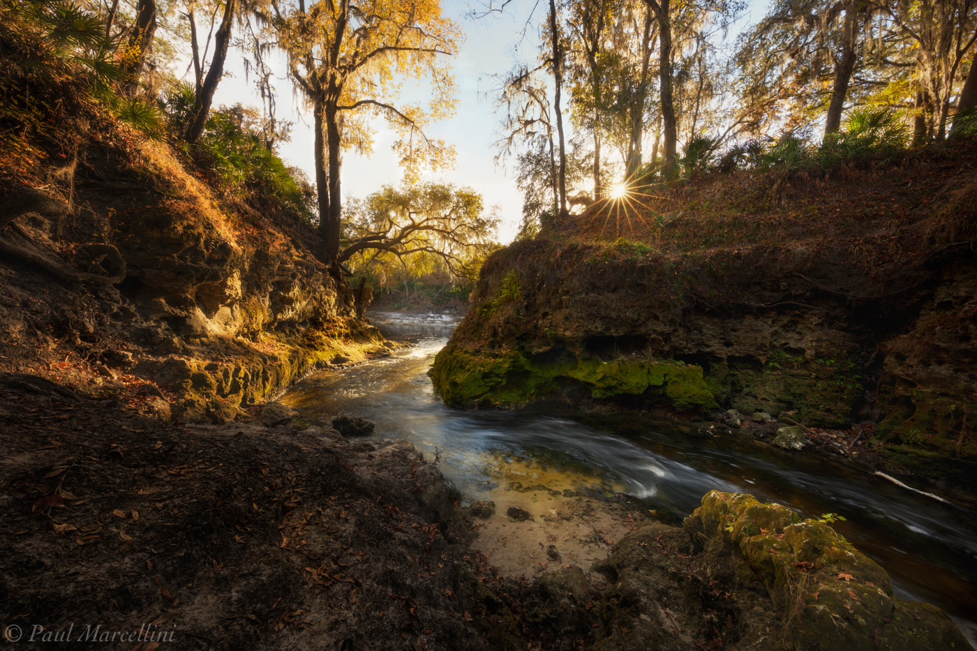 A creek winds its way toward the Suwannee River in the late afternoon.