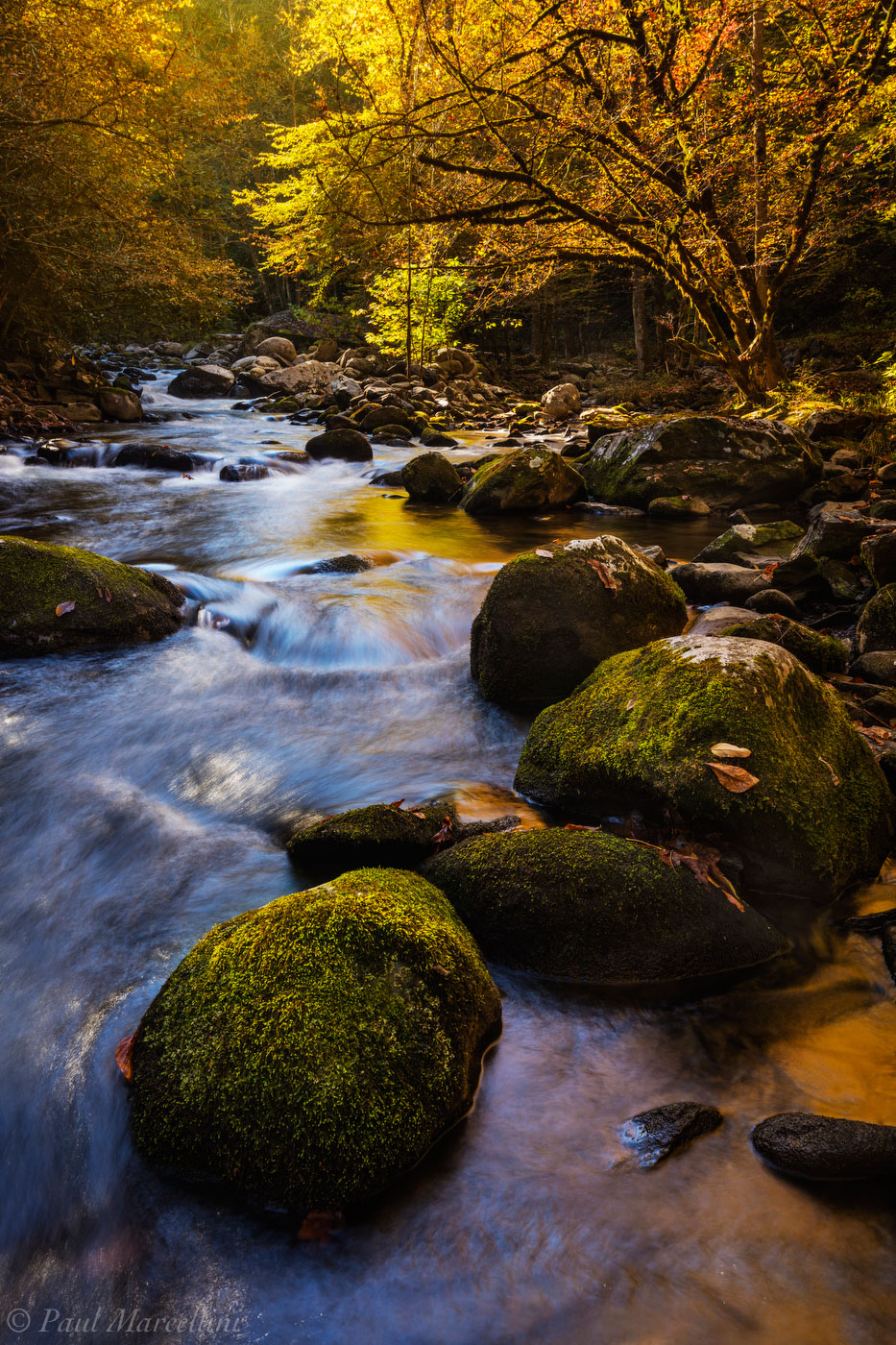 Fall reflects in a stream in the Tremont area of the Smokies.