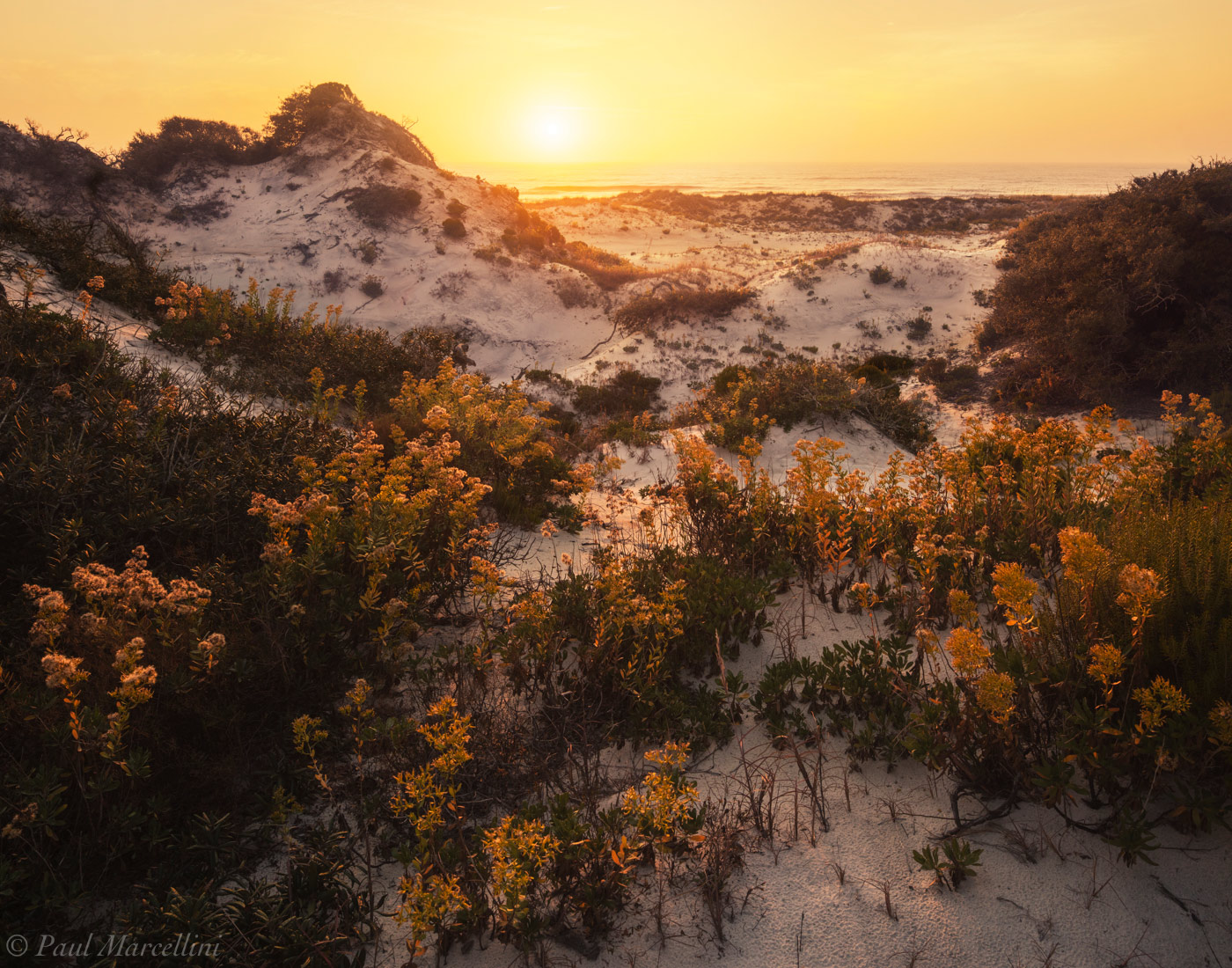 st joseph peninsula, cape san blas, florida, sand dune,sunset, flowers, photo