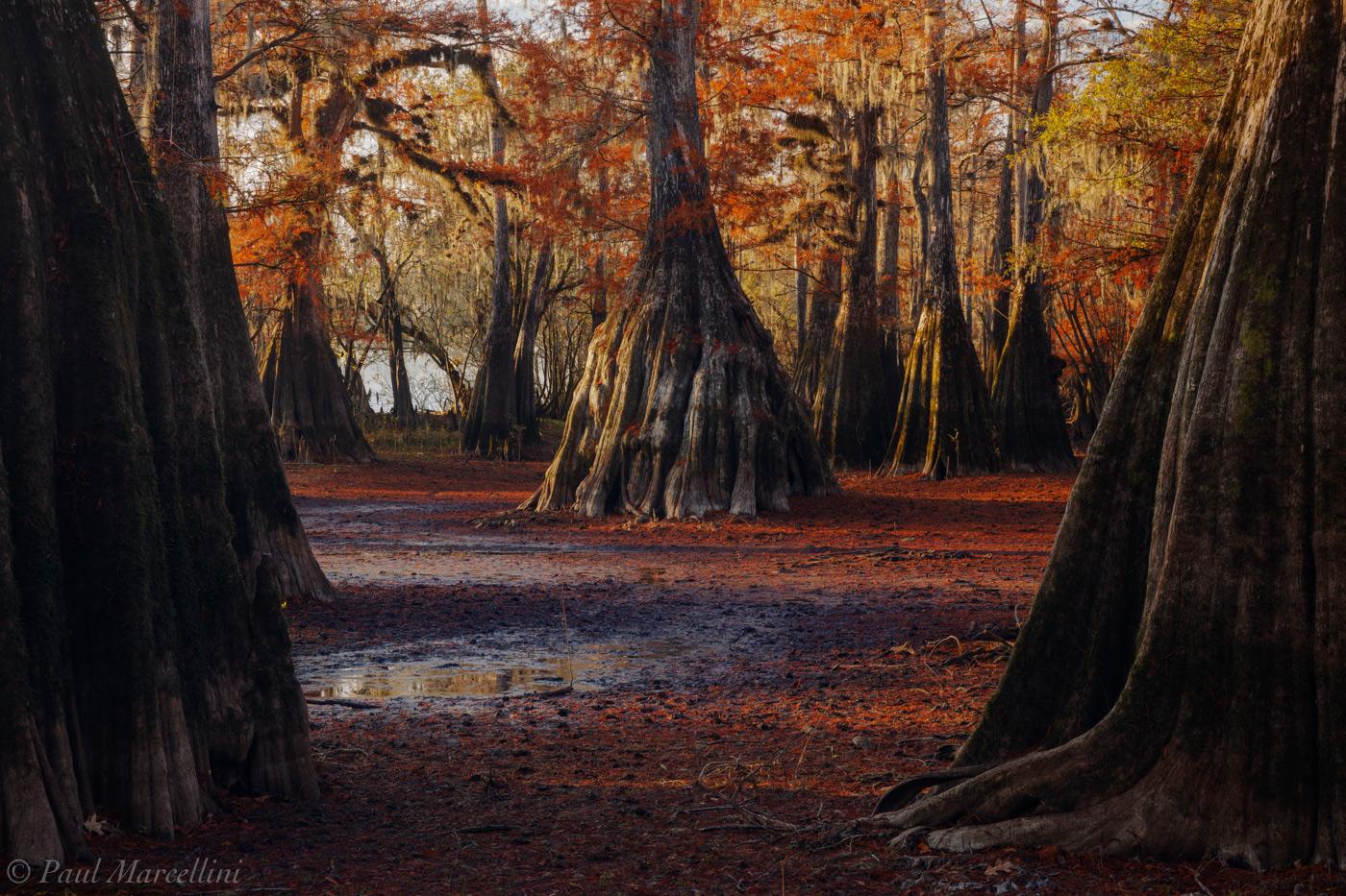 Suwannee Valley, Florida, fall, cypress, photo