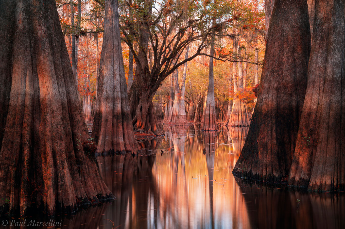 swamp, fall, autumn, cypress, Suwannee Valley, Florida, photo